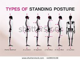 good posture stock images royalty free images u0026 vectors