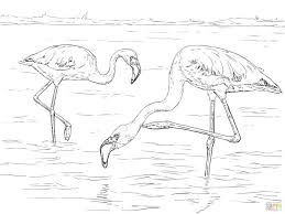 baby peacock coloring pages pink flamingo color bird cartoon cute