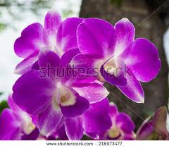 butterfly purple orchid flowerpeach butterfly 0rchid stock photo