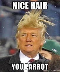 Nice Hair Meme - nice hair you parrot donald trump wild hair meme generator