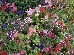 1665 best enjoy flower gardening images on pinterest flowers