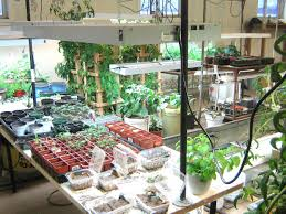basement gardening green houses pinterest basements gardens