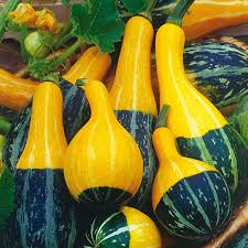 2g approx 30 ornamental gourd seeds pear bicolor excellent for