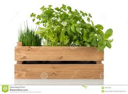 kitchen herbs kitchen herbs in wooden crate stock image image 41847365
