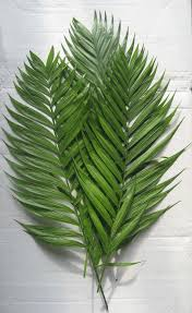 palms for palm sunday purchase premium emerald palm
