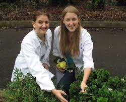 native plants brisbane students take many routes to identify native plants cquniversity