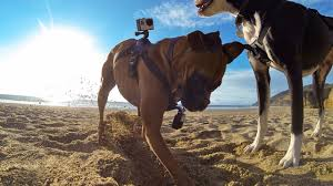 Gadgets For Pets Gearhacker 10 Pawfect Tech Gadgets For Pets And Pet Lovers