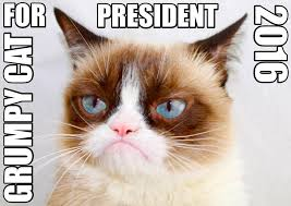Meme Grumpy Cat - grumpy cat for president 2016 grumpy cat know your meme