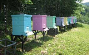 bee keeping love the colors beehive boxes with attached water
