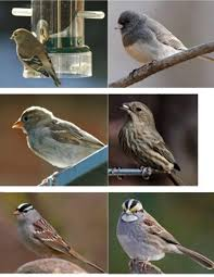 Michigan birds images Wild birds unlimited birds you see at michigan bird feeders jpg