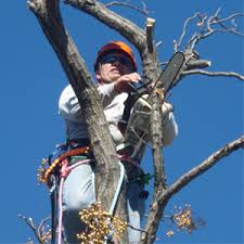 affordable tree service in richardson tx patriot tree service