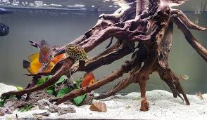 Driftwood Aquascape Planted Tank Gravity By Michael Zaky Aquarium Design Contest