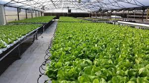 organic hydroponic garden centers denver garden centers colorado