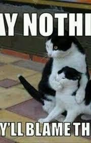 Random Cat Meme - random cat memes ur not fat ur fluffy wattpad