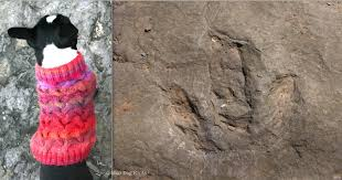 knitting pattern dinosaur jumper tracking patterns deep time moo dog knits