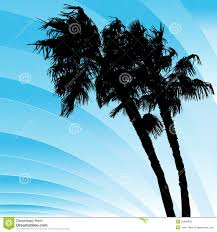 windy bending palm trees royalty free stock images image 23689839