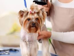 pet grooming salon in palm bay u0026 melbourne