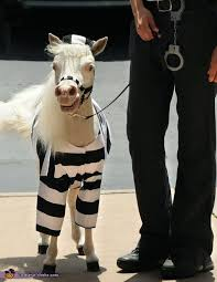 Halloween Costumes Horse Equine Halloween Costumes Wrong Horse Man