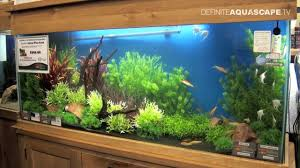 Plants For Aquascaping Aquascaping Aquarium Ideas From Aquatics Live 2012 Part 5 Youtube