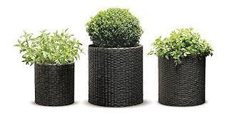 outdoor pot plants amazon com