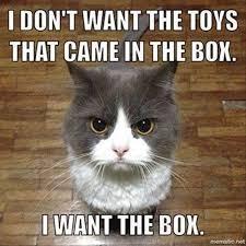 Cat Trap Meme - cat memes 2 normie memes amino