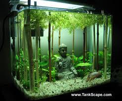Petsmart Christmas Aquarium Decorations by 115 Best Water Gardens Images On Pinterest Water Gardens Shrimp