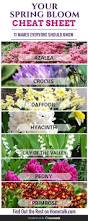 25 best most popular flowers ideas on pinterest care of
