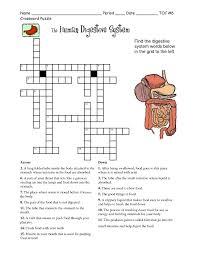 the human digestive system crossword worksheet organ anatomy