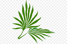palm leaves for palm sunday palm sunday palm branch easter clip palm leaf png
