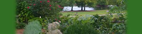 Decorative Shrubs Beautify Your Property With Ornamental Trees And Shrubs