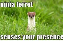 Ferret Meme - ninja ferret senses vour presence ferret meme on me me