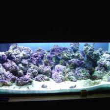 Reef Aquarium Lighting Will Less Than 3w Led U0027s Support Corals Reef Sanctuary