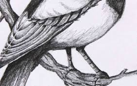 photos beautiful pencil sketches of birds drawing art gallery