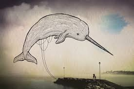 drawn narwhal the ocean pencil and in color drawn narwhal the ocean