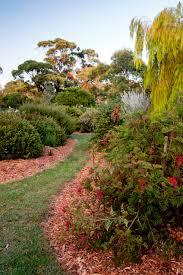 native plant nursery sydney boongala