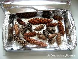 how to make pine cones pop and debug pine cones an