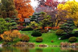 Chicago Botanic Garden Membership Magical Fall Colors At Chicago Botanic Garden Photograph By