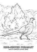 state bird of south dakota south dakota state symbols coloring page free printable coloring