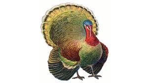 thanksgiving turkey art thanksgiving speedpaint tutorial youtube