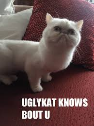 Ugly Cat Meme - ugly cat meme guy