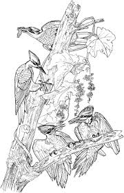 267 best coloring pages birds images on pinterest coloring books