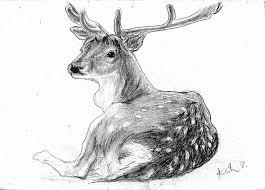 drawn deer pencil sketch pencil and in color drawn deer pencil
