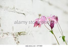 garden wall stock photos u0026 garden wall stock images alamy