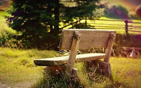 mood nature bench bench shop shop grass green tree tree the field