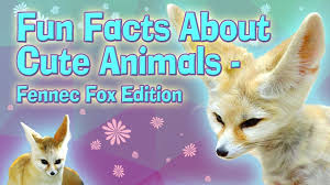 facts about animals fennec fox explore awesome