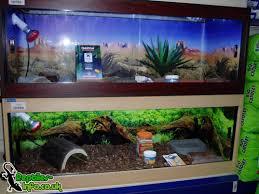 tortoise home decor tortoise house에 대한 이미지 검색결과 사육장 pinterest
