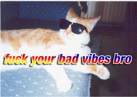 Good Vibes Meme - positive vibes meme cat vibes best of the funny meme