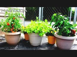 Vegetable Pot Gardening For Beginners Urban Vegetable Garden Urban Garden City