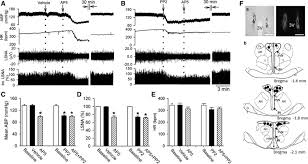 src kinases regulate glutamatergic input to hypothalamic