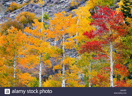 fall color lundy canyon inyo national forest sierra nevada